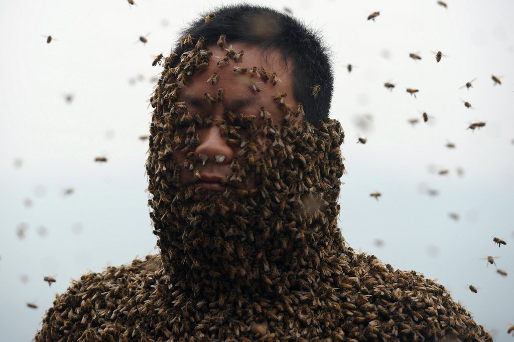 ". 10. (tie) BEES <p>A swarm of angry bees in the Bee County town of Beeville? We�re shocked, shocked. (previous ranking: unranked) <p><b><a href=\'http://metro.co.uk/2014/06/02/family-attacked-by-swarm-of-bees-in-beeville-4746896/\' target=""_blank\""> LINK</a></b> <p>    (STR/AFP/Getty Images)"