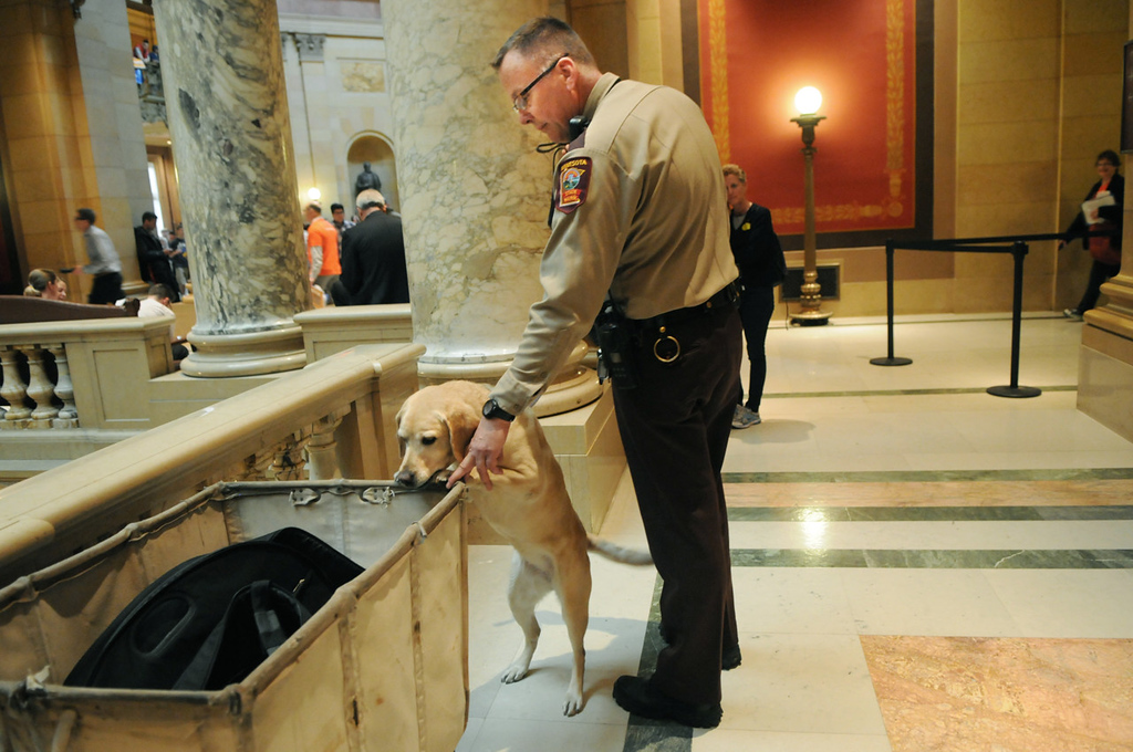 . Minnesota state trooper Jim Wellnitz leads his yellow Lab Sunny, an explosives detection dog, around the hallways of the state Capitol before the floor vote on the gay-marriage bill in the Minnesota House of Representatives on Thursday. (Pioneer Press: Jean Pieri)