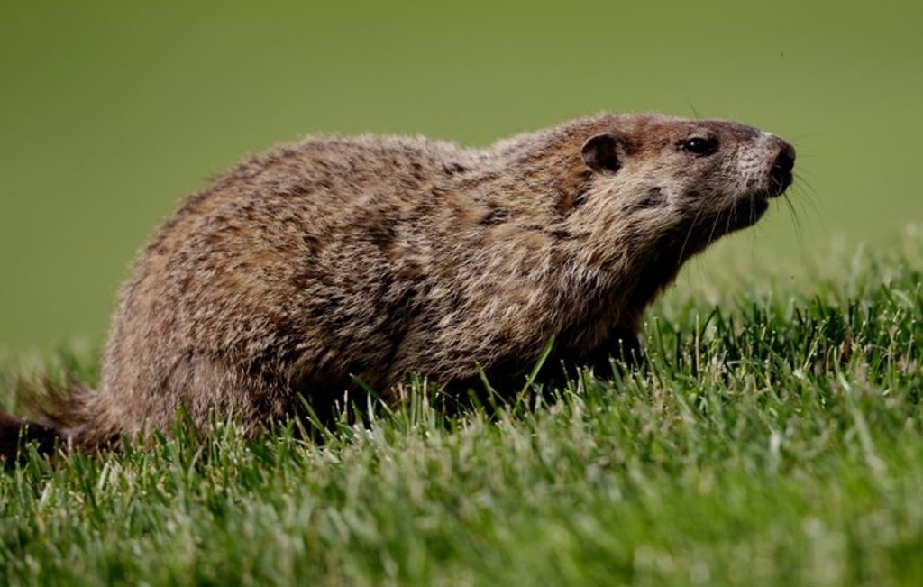 """. <p>5. BARBECUED MARMOT <p>Sounds like a recipe. For bubonic plague. (unranked) <p><b><a href=\'http://www.theguardian.com/world/2013/aug/27/bubonic-plague-outbreak-feared-central-asia\' target=\""""_blank\""""> HUH?</a></b> <p>    (Ross Kinnaird/Getty Images)"""