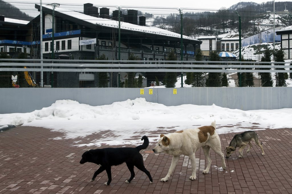 """. <p><b> Sochi Olympics officials, rushing to get their city presentable for the Winter Games, spent the past couple of weeks rounding up and killing stray � </b> <p> A. Dogs <p> B. Cats <p> C. Gays <p><b><a href=\'http://www.nydailynews.com/sports/more-sports/sochi-plans-mass-killing-stray-dogs-olympics-article-1.1600417\' target=\""""_blank\"""">HUH?</a></b> <p>   (AP Photo/Pavel Golovkin)"""