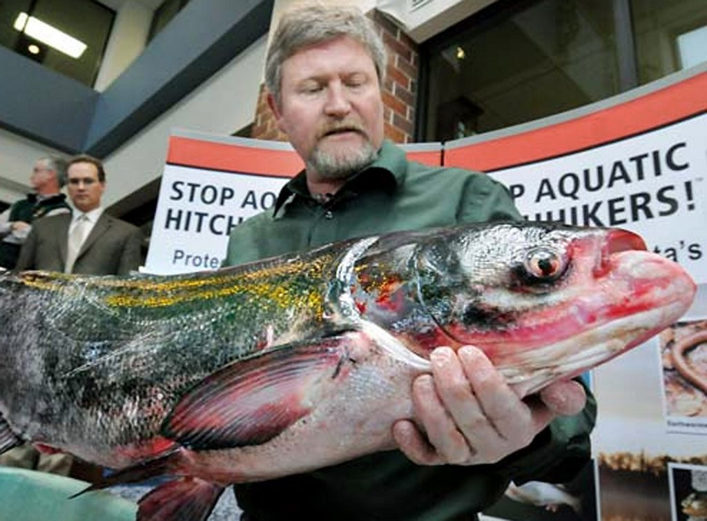 """. <p>10. (tie) ASIAN CARP <p>Has an IQ comparable to the politicians who want to change its name. (6) <p><b><a href=\'http://www.twincities.com/localnews/ci_25432921/minnesota-legislature-considers-renaming-asian-carp\' target=\""""_blank\""""> HUH?</a></b> <p>     (Pioneer Press:  Richard Marshall)"""