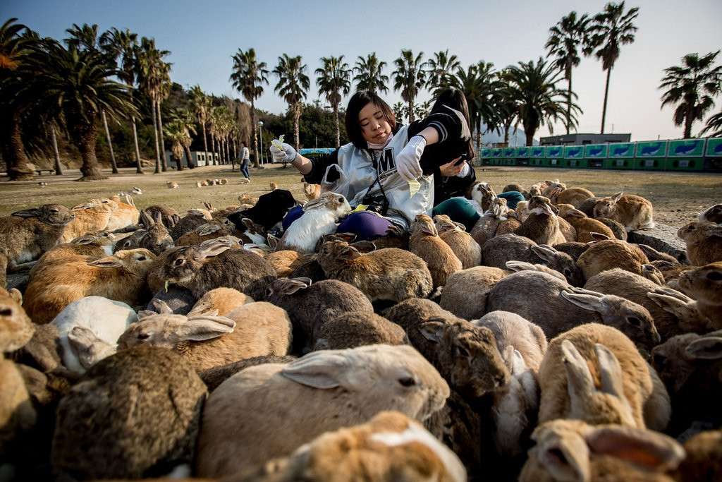 . <p>39. RABBITS <p>Still resistant to birth control despite easier availability under Obamacare.   (Chris McGrath/Getty Images)