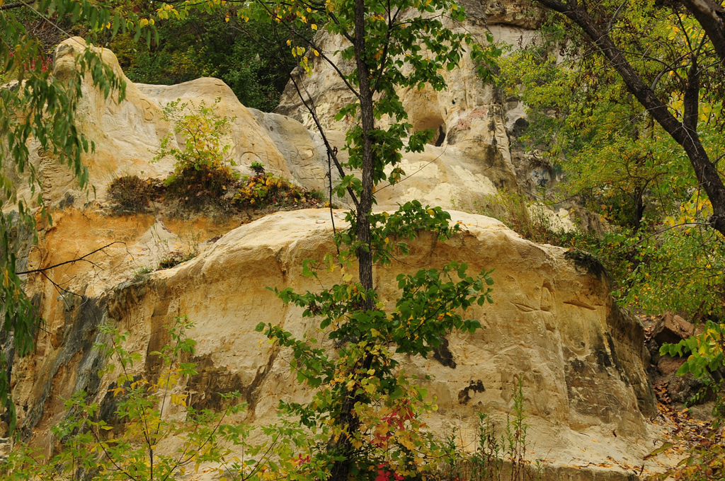 """. \""""Imnizaska\"""" is the Dakota name for these white sandstone cliffs, located in St. Paul\'s Bruce Vento Nature Sanctuary, just east of downtown St. Paul.  (Pioneer Press: Scott Takushi)"""