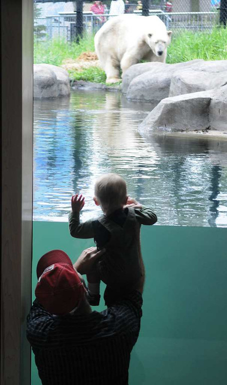. Polar Bear Odyssey is one of the newer exhibits at the Como Zoo. (Pioneer Press: John Doman)
