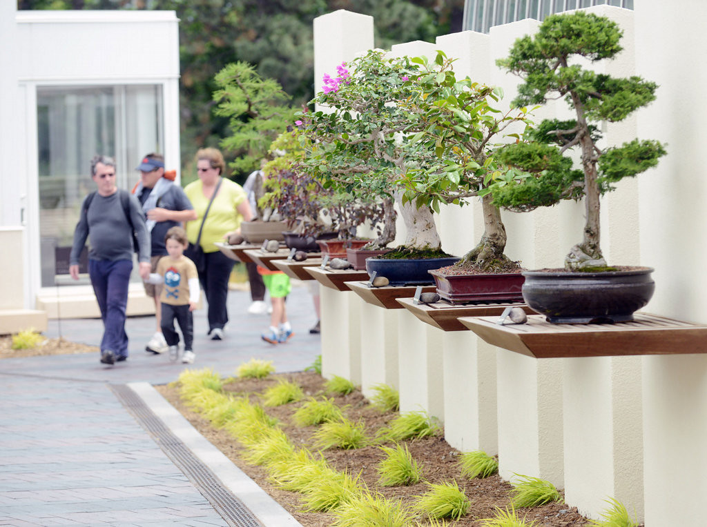 . A collection of bonsai trees are on exhibit outdoors at the Charlotte Partridge Ordway Japanese Garden in St. Paul\'s Como Park on June 28, 2013. The adjacent zoo has recently completed its $2.8 million addition off the existing conservatory that will allow for year-round viewing of their 150-tree bonsai collection as well as the Japanese Garden. (Pioneer Press: Chris Polydoroff)