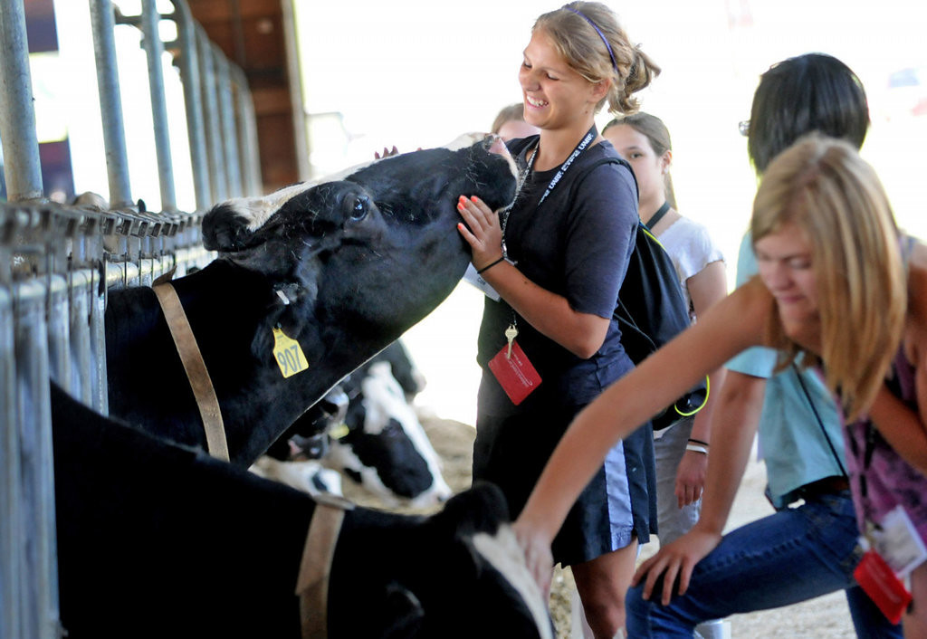. Camp Badger Exploring Engineering participant Sophia Cole, left, was the first in her group to ask if she could pet the cows during a tour of the lab farm at the University of Wisconsin-River Falls on Wednesday, July 10, 2013. Eighth-grade students toured various companies and engaged in a variety of activities connected to engineering during the one-week residential camp. (Pioneer Press: Jean Pieri)