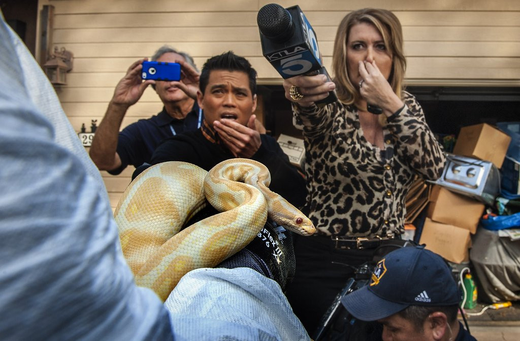 """. <p>5. DEAD PYTHONS <p>Stink almost as bad as the 2011-13 Twins. (unranked) <p><b><a href=\'http://www.twincities.com/breakingnews/ci_25017984/hundreds-snakes-found-calif-home\' target=\""""_blank\""""> HUH?</a></b> <p>     (AP Photo/The Orange County Register, Bruce Chambers)"""