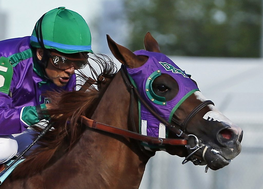 ". <p><b> California Chrome�s Triple Crown chances got a huge boost Monday after New York officials announced he�d be allowed to race in the Belmont Stakes with � </b> <p> A. Nasal strips <p> B. Lasix <p> C. No jockey <p><b><a href=\'http://www.twincities.com/sports/ci_25795726/california-chrome-cleared-wear-nasal-strip-belmont\' target=""_blank\""> LINK </a></b> <p>    (AP Photo/Matt Slocum, File)"