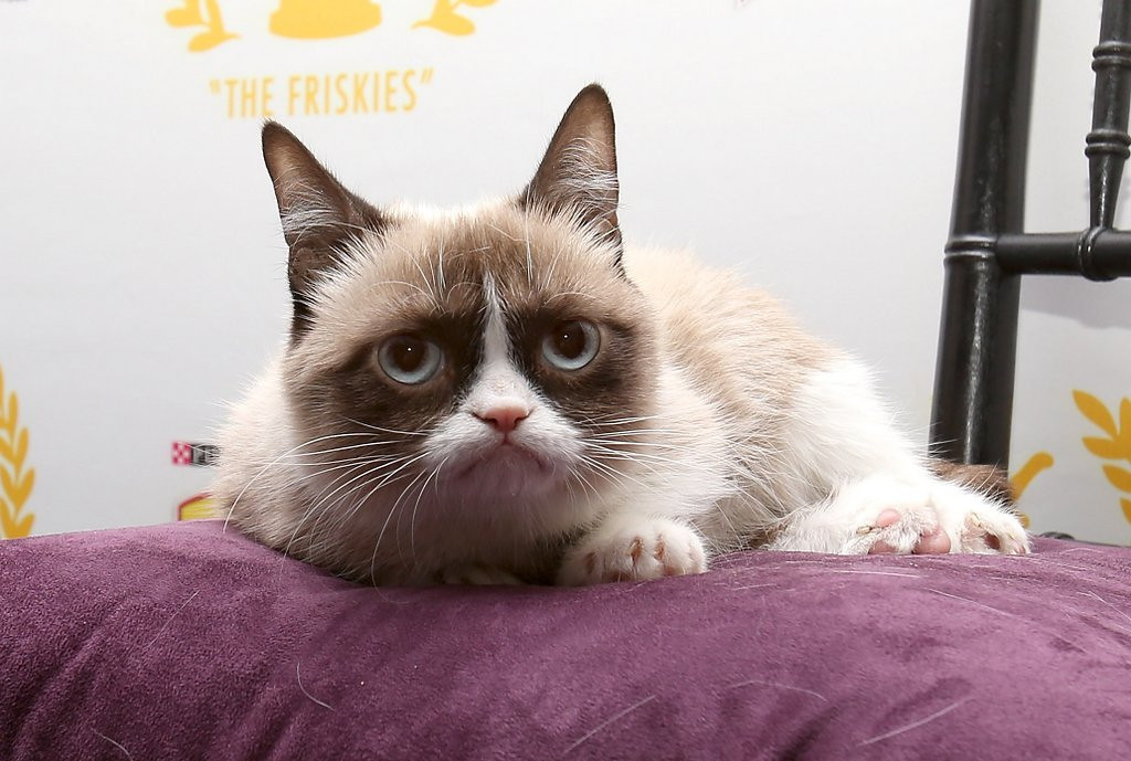 . <p>3. CATS <p>You�d be grumpy, too, if you were completely devoid of personality.   (Mike Lawrie/Getty Images)