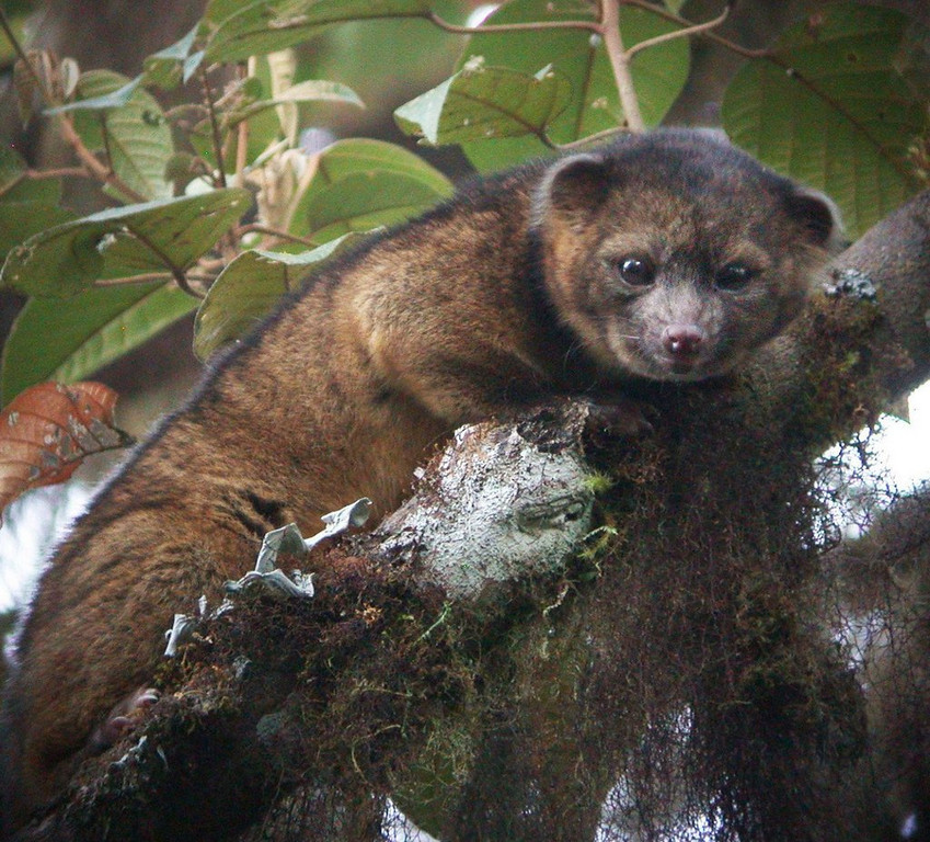 """. <p>5. OLINGUITO <p>A new species of mammal has been discovered. And it is delicious! (unranked) <p><b><a href=\'http://abcnews.go.com/Technology/newly-discovered-mammal-suffered-mistaken-identity-centuries/story?id=19968422\' target=\""""_blank\""""> HUH?</a></b> <p>    (National News/Zuma Press/MCT)"""