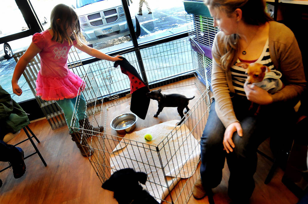 . Camilla Millett, 8, plays with a puppy named Hope during a pet adoption event at Pet Evolution in Woodbury.  (Pioneer Press: Sherri LaRose-Chiglo)