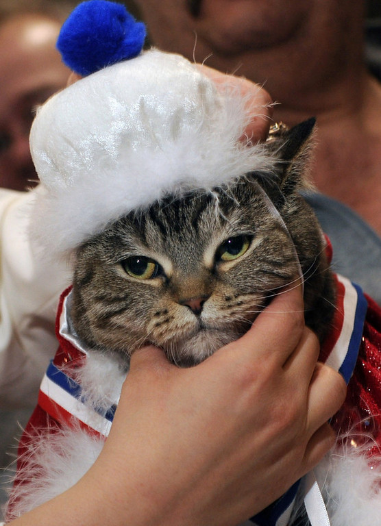 . Little Bear, a Straight Hair Selkirk Rex cat, is crowned Queen Cat by Winter Carnival royalty at  the Saintly City Cat Club\'s 38th Annual Championship Cat Show. (Pioneer Press: Scott Takushi)
