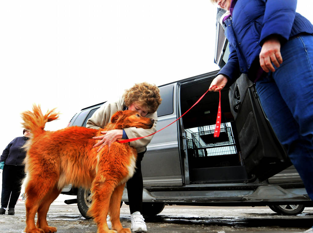 . Deanna Fetters, of Superior, Wis., hugs her new dog, Archie, a Golden Retriever mix, after driving 2 hours to meet the Every Dog Rescue Transport group in Eau Claire, Wis. Every Dog Counts Rescue volunteer driver Lynne Shaffer, right, holds Archie\'s leash, right, after transporting him from Tomah, Wis. (Pioneer Press: Sherri LaRose-Chiglo)