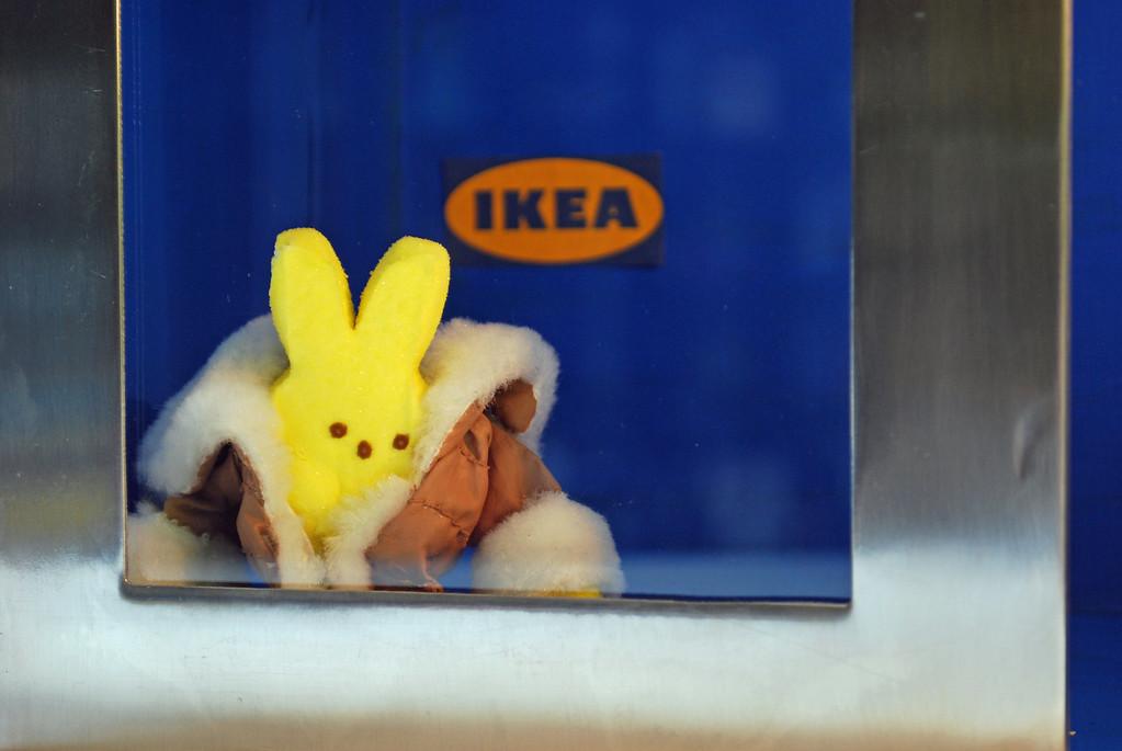". \""IKEA Bunny,\"" by Katie MacInnes, St. Paul"