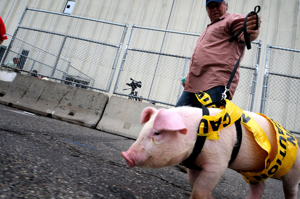 ". Saint Paul Saints mascot ""Mackloeboar\"" named after the rapper Macklemore, arrives with owner Dennis Hauth, to the Saint Paul Saints ballpark site demolition wrapped in caution tape.  (Pioneer Press: Sherri LaRose-Chiglo)"