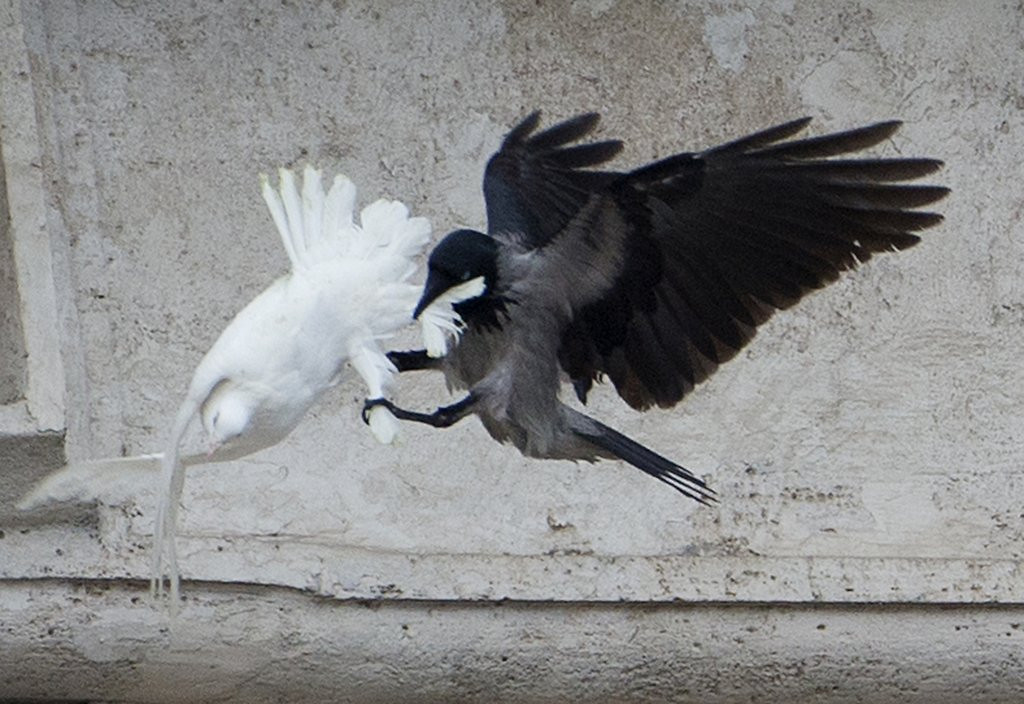 """. <p>8. DOVES <p>According to their seagull nemeses, they taste just like chicken. (8) <p><b><a href=\'http://www.twincities.com/breakingnews/ci_25003160/pro-animal-groups-appeal-pope-after-dove-attack\' target=\""""_blank\""""> HUH?</a></b> <p>   (AP Photo/Gregorio Borgia)"""