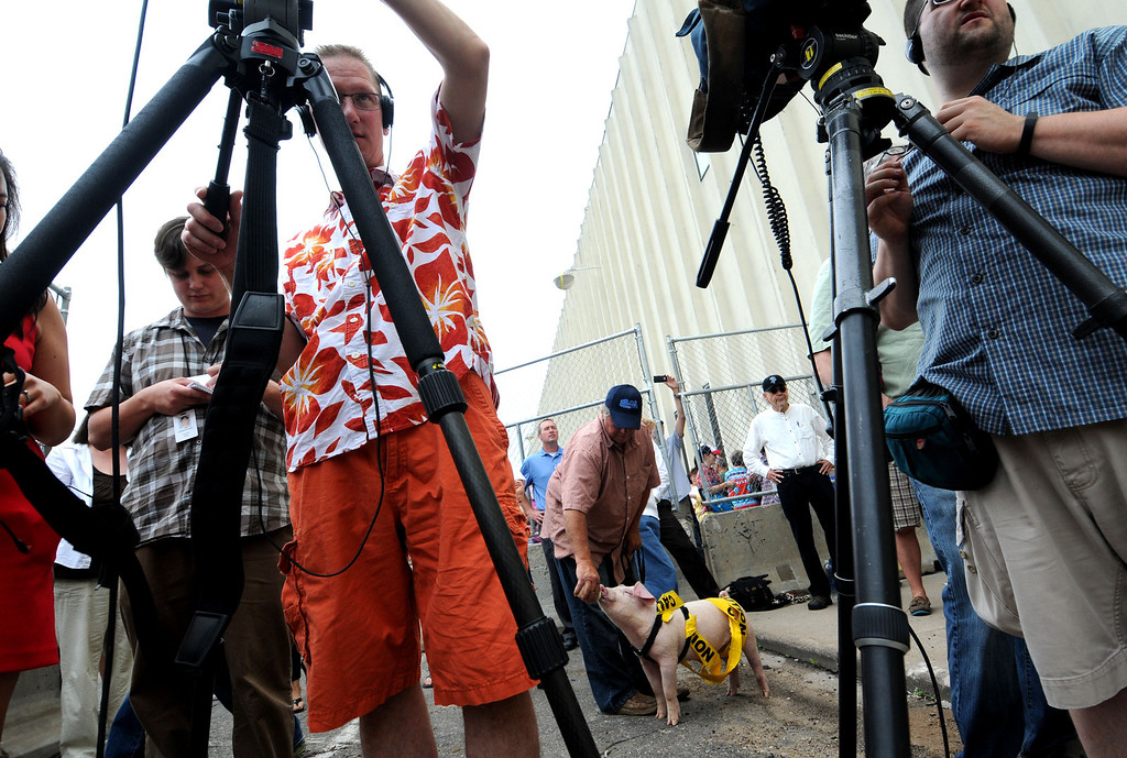 ". The Saint Paul Saints mascot ""Mackleboar\"", 3 months, has his squeals quieted by a bottle as members of the local media document the the Saints ballpark site demolition. (Pioneer Press: Sherri LaRose-Chiglo)"