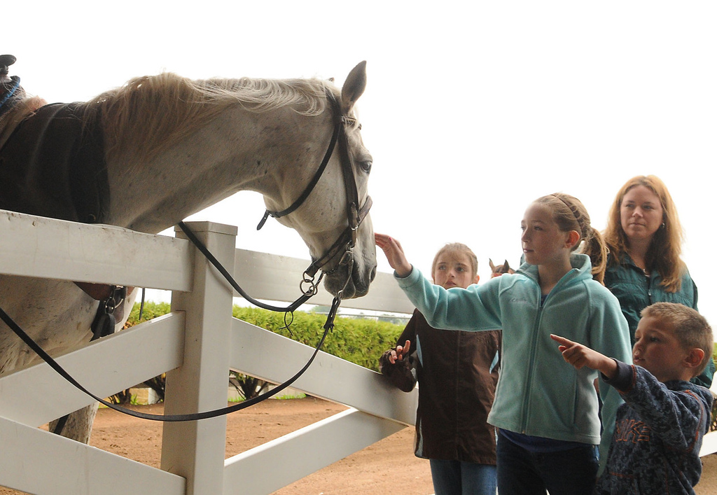 . A family of race fans gets up close and personal with some of the horses. (Pioneer Press: John Autey)