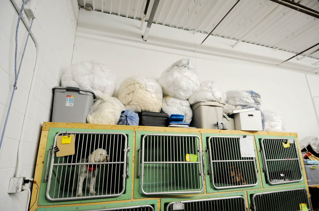 . Sunny, a 11-year-old Bichon, top left, waits his turn to be photographed at the Midwest Animal Rescue Services on Saturday evening after being transported from Indianapolis.  (Pioneer Press: Sherri LaRose-Chiglo)