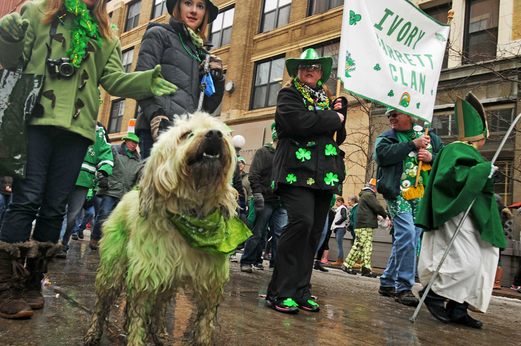 . Finnigan, a Wheaton Terrier (Irish farmdog) showed up in green for the annual St. Patrick\'s Day parade.  (Pioneer Press: Scott Takushi)