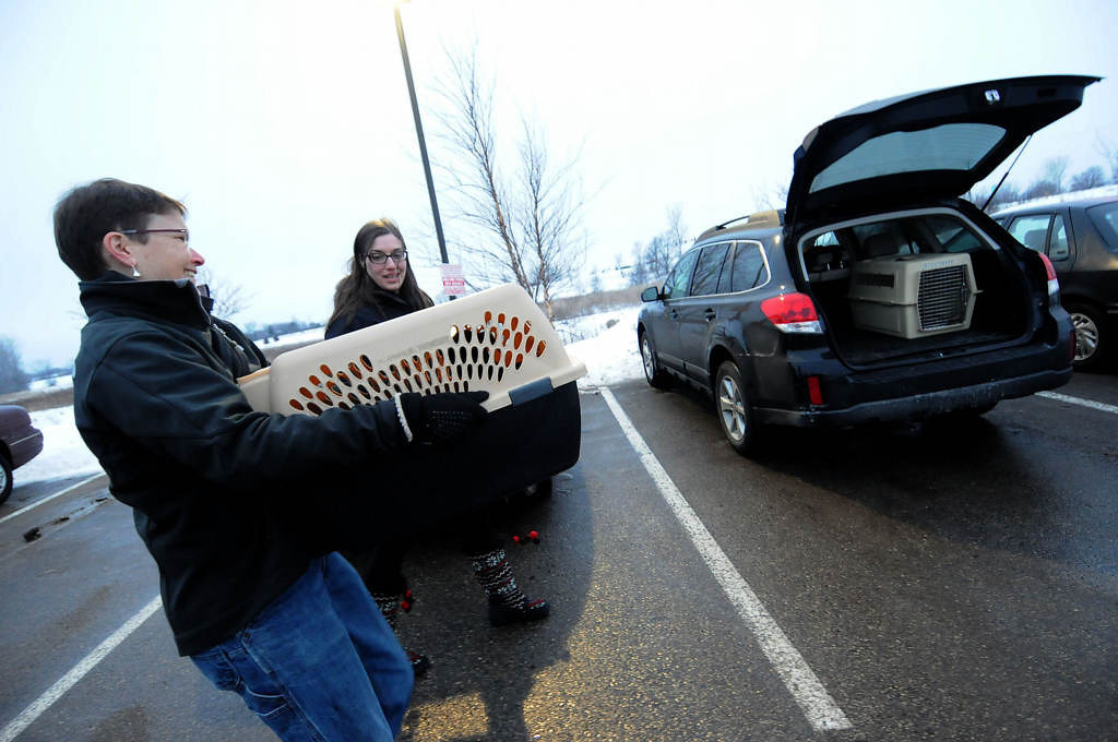 . The two pit mix puppies are carried by Every Dog Counts Rescue transport volunteer Martha Vest, left, as they make the last leg of the journey to Kate Benvenuti of Twin Cities Pet Rescue in Woodbury Saturday night. (Pioneer Press: Sherri LaRose-Chiglo)