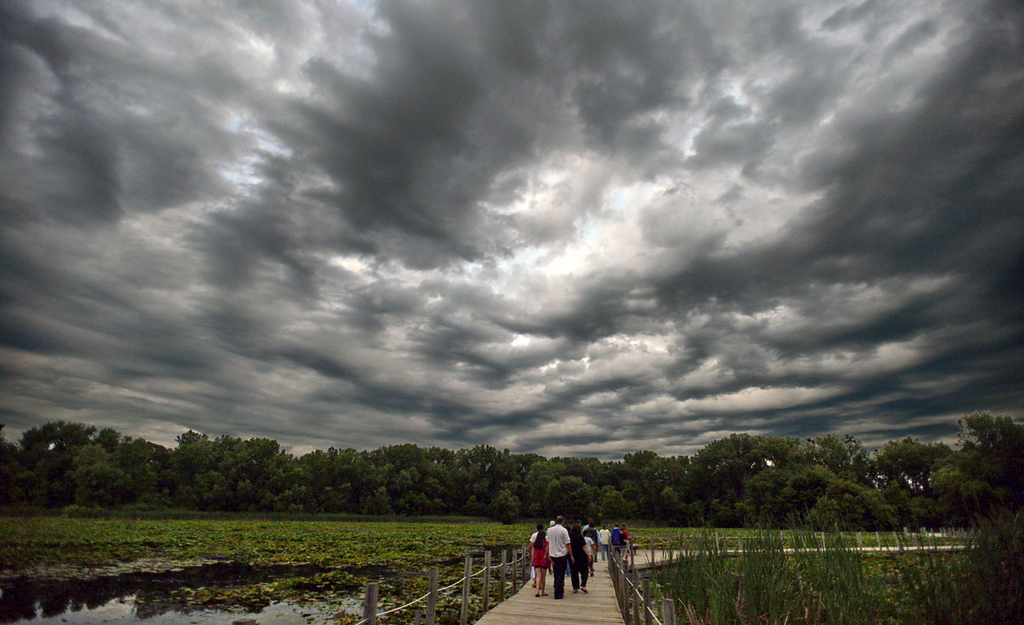 . With a sky ripe for bat spotting, the bat tour group walks along the boardwalk at Maplewood Nature Center.  (Pioneer Press: Chris Polydoroff)