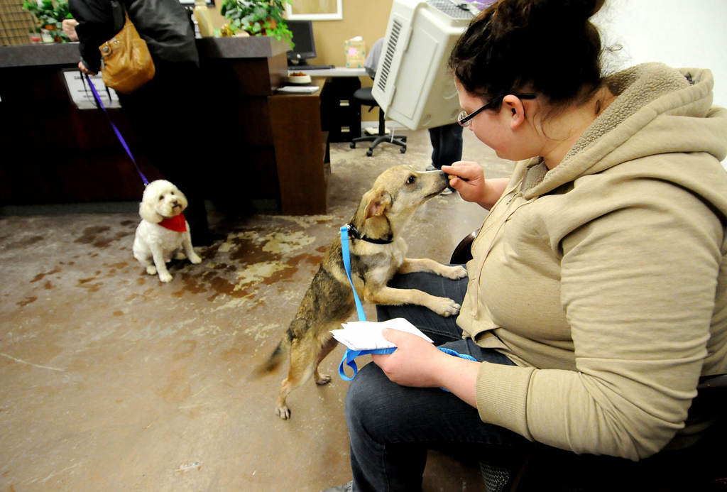 """. Sunny, left, waits to go home with his new foster mom, Joyce Stevenson of Maple Grove, as she checks out at MARS Saturday night.  Monika Kopet, right, of Crystal, gets to know \""""Bandit\"""", a five-month-old mixed breed dog she adopted. Kopet changed Bandit\'s name to Wilson.  (Pioneer Press: Sherri LaRose-Chiglo)"""